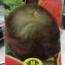 SANDIA FLORIDA GIANT (10 gr.).