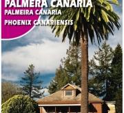 PALMERA CANARIA (10 gr.).