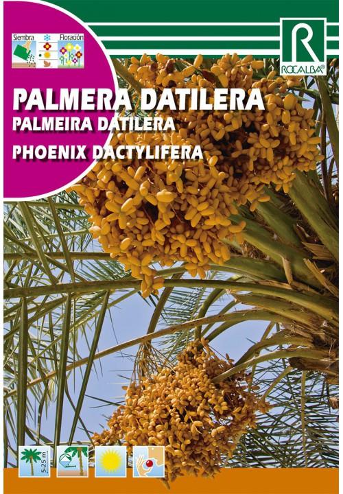 S 6 gr Palmera Datilera Phoenix Dactylifera