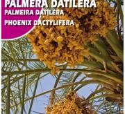 PALMERA DATILERA (6 gr.).