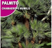PALMITO (5 Semillas)
