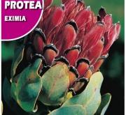 PROTEA EXIMIA (6 gr.).