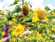Coberturas para Insectos Antagonistas de Plagas