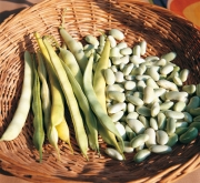 variedades de judias verdes en españa