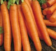 zanahoria nele f1