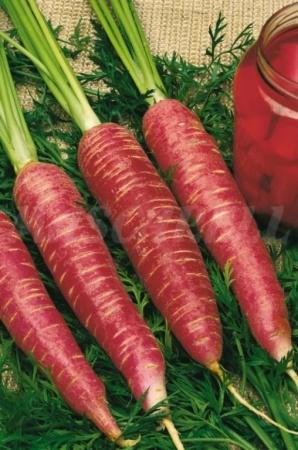 Zanahoria Roja De Vinagre 100 Gr Fitoagricola Subespecie sativus, la zanahoria, pertenece a la familia de las umbelíferas, también denominadas apiáceas. zanahoria roja de vinagre 100 gr