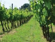 Semillas para Coberturas Vegetales de Cultivos