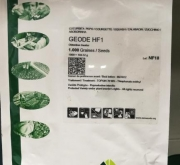 calabacin geode