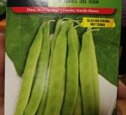 semillas de judia tierna