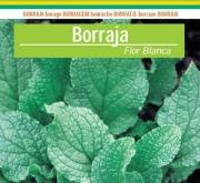 BORRAJA DE FLOR BLANCA (5 Kgr,).