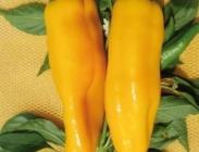 Semillas de Pimientos Italianos Amarillos