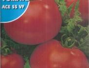 Semillas de Tomates Gordos Rastreros