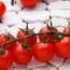 tomate bronco semillas ecologico