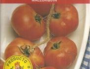 Semillas de Tomates de Colgar
