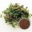 BROCOLI CALABRESE MICROGREENS (5 Kgr.).