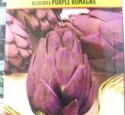 ALCACHOFA PURPLE ROMAGNA (2 gr.).