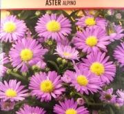ASTER ALPINO (0,6 gr.).