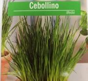 CEBOLLINO MEDIO (1 gr.).