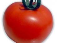 Semillas de Tomates de Caña Medianos y Pequeños