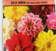 DALIA UNWIN SEMI ENANA (2 gr.).