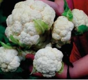 COLIFLOR MULTI HEAD WHITE F1 (1000 Semillas)