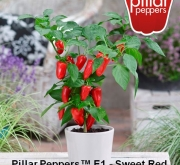 PIMIENTO SWEET RED F1 (1000 Semillas)