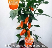 PIMIENTO SWEET ORANGE F1 (1000 Semillas)