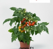 TOMATE JAMES F1 (1000 Semillas)
