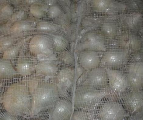 CEBOLLA DE CALÇOTS (Cerca de 25 Kgr.) - Mínimo Palé con 40 Sacos.
