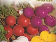 Rabanitos Redondos Especialidades en Colores