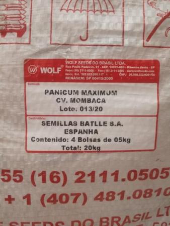 PANICUM MAXIMUM CV. MOMBACA (20 Kgr.) - Minimo 2 Sacos.