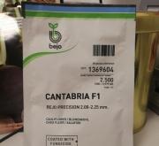 COLIFLOR CANTABRIA Precisión (2.500 Semillas).