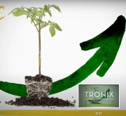 TOMATE TRONIX F-1 (1.000 Semillas)