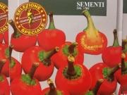 PIMIENTO CALABRESE PICANTE RED CHERRY SMALL (2,5...