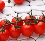 bronco semillas tomate
