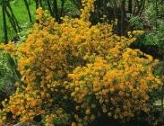 Semillas de Arbustos