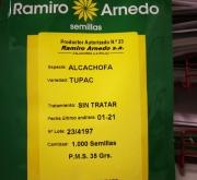 ALCACHOFA TUPAC (1000 Semillas)
