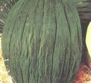 MELÓN TENDRAL VALENCIANO TARDIO (100 gr.).
