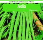 JUDÍA PHENOMEN (100 gr.).