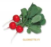 RABANITO GLORIETTE F1 (10.000 Semillas).