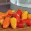 pimiento mini naranja