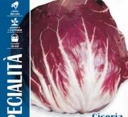ACHICORIA ROJA DE CHIOGGIA 3 Sel. Livrette (1,5...