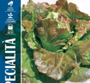 LECHUGA CANASTA Sel. Extra (6 gr.).