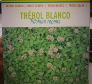 TRÉBOL BLANCO ENANO HUIA Inoculado y Pildorado (1...