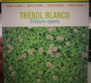 TRÉBOL BLANCO ENANO RD84 Inoculado y Pildorado (1...