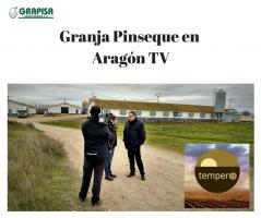 Grapisa en Tempero de Aragón TV