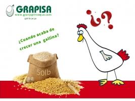 ¿Cuándo termina una gallina de crecer?