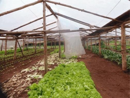 AYUDAS A TITULARES DE EXPLOTACIONES AGRICOLAS Y GANADERAS POR DAÑOS PRODUCIDOS POR CATASTROFES NATURALES