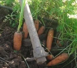 Hortalizas de raíz