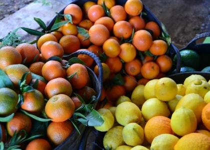 Nuestras naranjas y limones